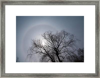 Sun Halo Bare Trees And Silver Gray Winter Sky Framed Print