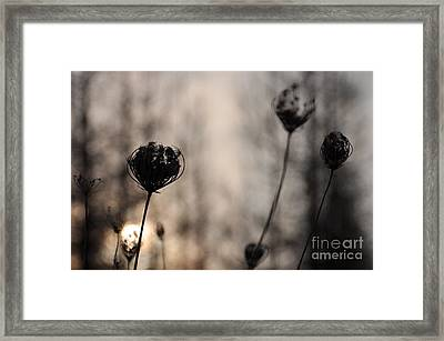 Sun In Darkness Framed Print