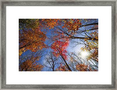 Sun In Fall Forest Canopy  Framed Print