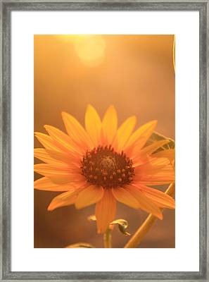 Framed Print featuring the photograph Sun Kissed by Alicia Knust