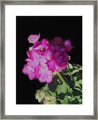 Sun Kissed Geranium  Framed Print by Christine Fournier