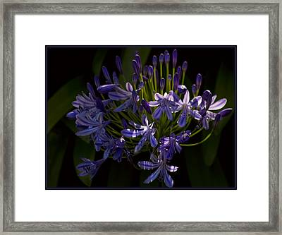Framed Print featuring the photograph Sun Kissed by Kim Andelkovic