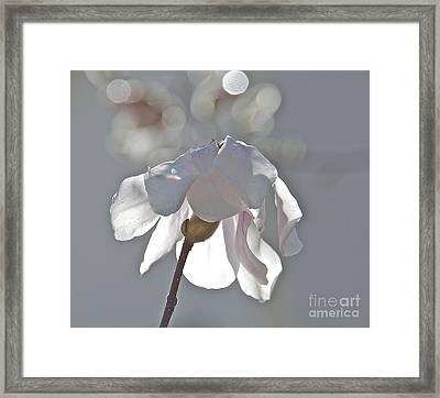 Sun Kissed Magnolia Framed Print