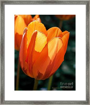 Framed Print featuring the photograph Sun Kissed Tulip by Barbara McMahon