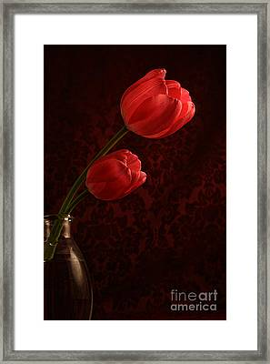 Sun Kissed Tulips Framed Print by Darren Fisher