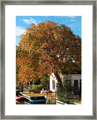 Sun Leaves Framed Print
