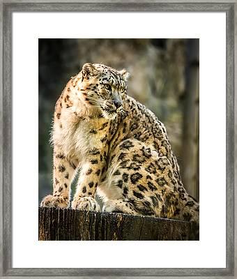 Framed Print featuring the photograph Sun Leopard Portrait by Chris Boulton