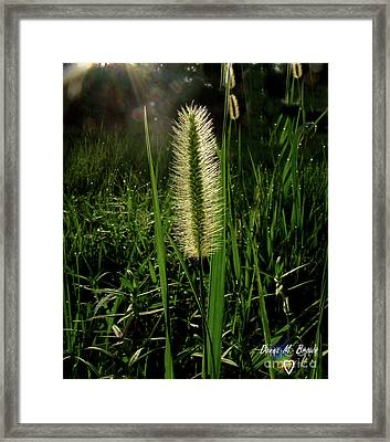 Framed Print featuring the photograph Sun-lite Grass Seed by Donna Brown