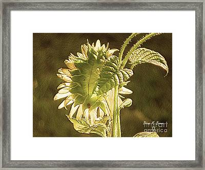 Framed Print featuring the photograph Sun-lite Sunflowwer by Donna Brown