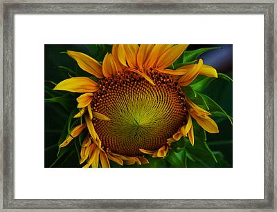 Framed Print featuring the photograph Sun Lover by John Harding