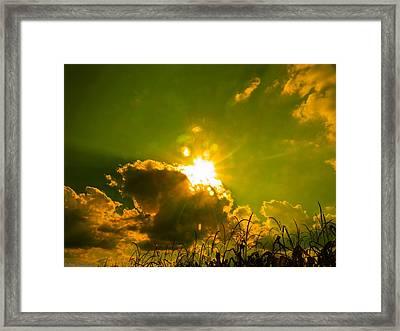 Sun Nest Framed Print