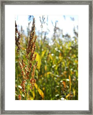 Sun Of Life Framed Print