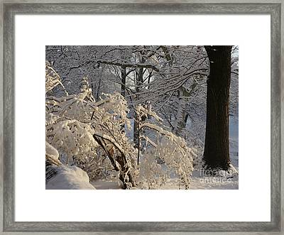 Sun On Snow Covered Branches Framed Print by Winifred Butler