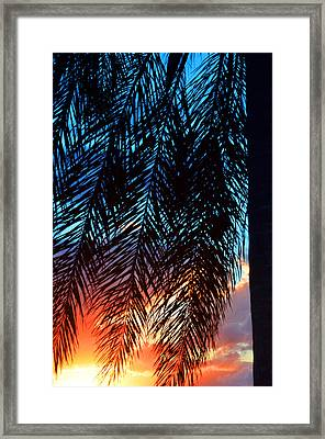 Sun Palm Framed Print