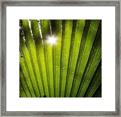 Sun Palm Framed Print by Mark Andrew Thomas