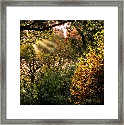 Framed Print featuring the photograph Sun Rays by Trevor Chriss