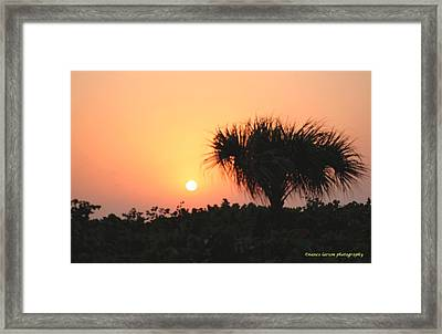 Sun Rise And Palm Tree Framed Print