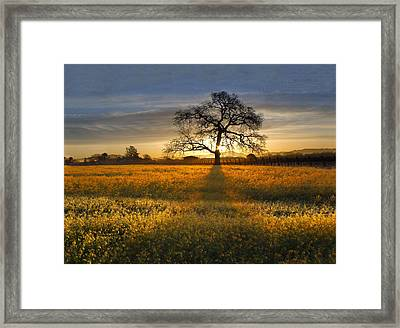 Sun Rise Oak In Yellow Mustard Framed Print