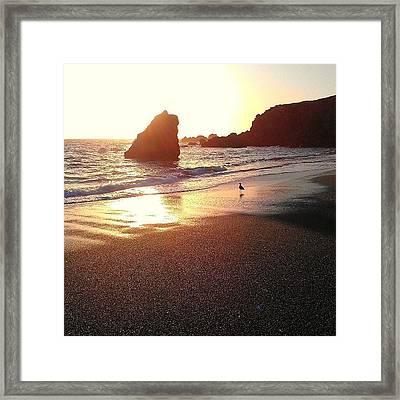 Sun Rock Bird Framed Print