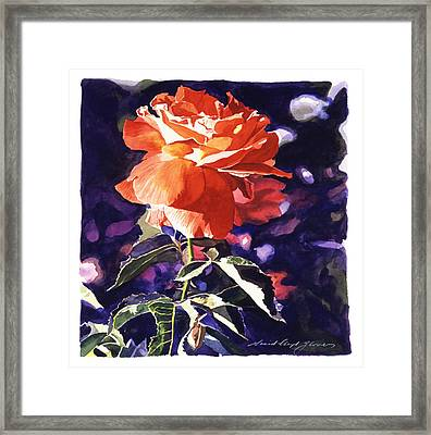 Sun Rose Framed Print by David Lloyd Glover