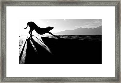Sun Salutation Framed Print by Christine Frick