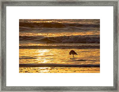 Sun Salutation Framed Print by Mary Lee Dereske