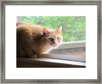 Sun Screened Framed Print by Tracy L Teeter