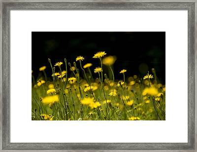 Sun Seekers Framed Print by Aaron Bedell