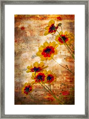 Sun Seekers Framed Print by Debra and Dave Vanderlaan