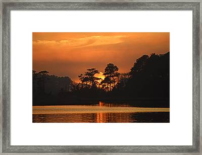 Framed Print featuring the photograph Sun Setting In Trees by Bill Swartwout