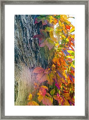 Sun Shards Framed Print by Ben Thompson