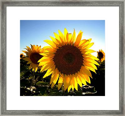 Sun Shine 3 Wc 2  Framed Print by Lyle Crump