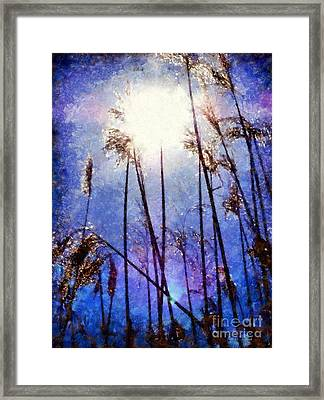 Sun Shine On The Marsh Grass Framed Print