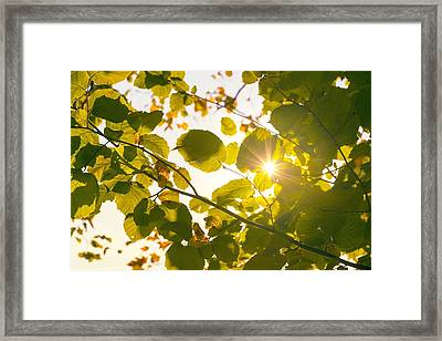 Framed Print featuring the photograph Sun Shining Through Leaves by Chevy Fleet