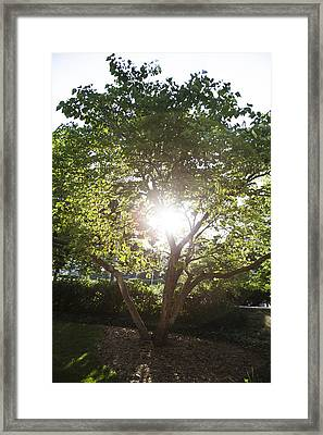 Sun Shining Through Tree Framed Print by John McGraw