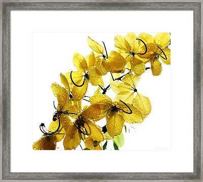 Sun Shower Framed Print by Chrystyne Novack