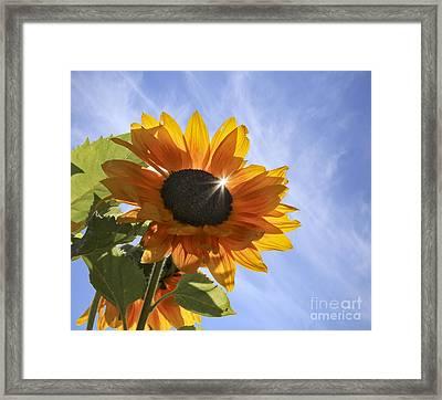 Sun Sparkle Framed Print