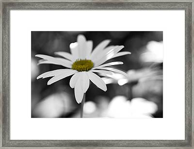 Sun-speckled Daisy Framed Print by Don Schwartz