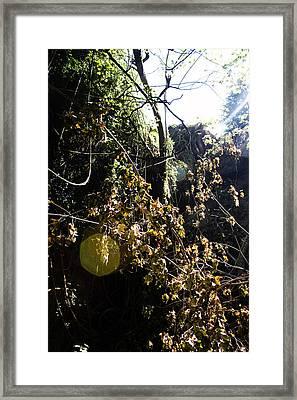 Sun Spot Framed Print