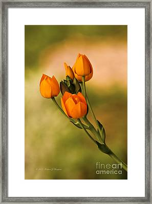 Sun Star Flower Framed Print