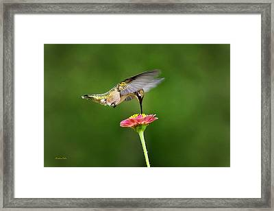 Framed Print featuring the photograph Sun Sweet by Christina Rollo