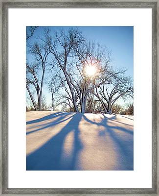 Sun Through Snow Covered Trees Framed Print