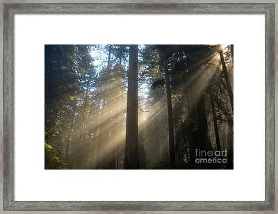 Sun Through The Redwoods Framed Print