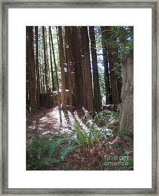 Framed Print featuring the photograph Sun Through The Sequoias by Suzanne McKay