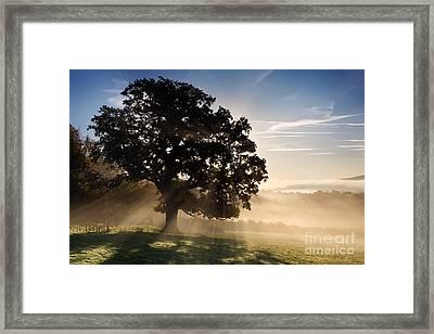 Misty Dawn Framed Print by Rod McLean