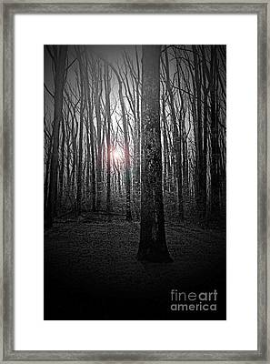 Sun Thru The Trees At Twilight Framed Print