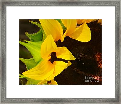 Sun Worshipper Framed Print by Joy Hardee