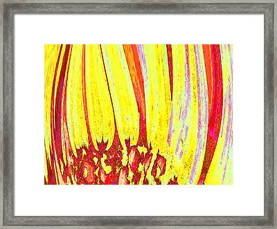 Sun Worshipper Framed Print