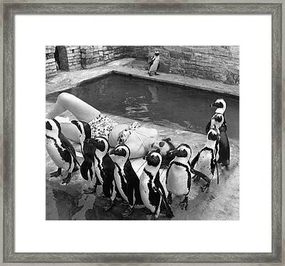 Sunbather And Penguins Framed Print by Underwood Archives