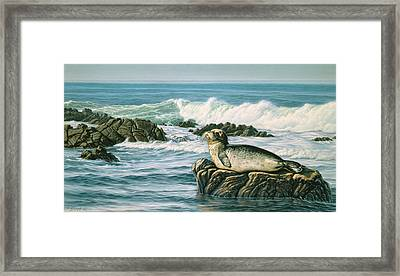 Sunbather  Framed Print by Paul Krapf